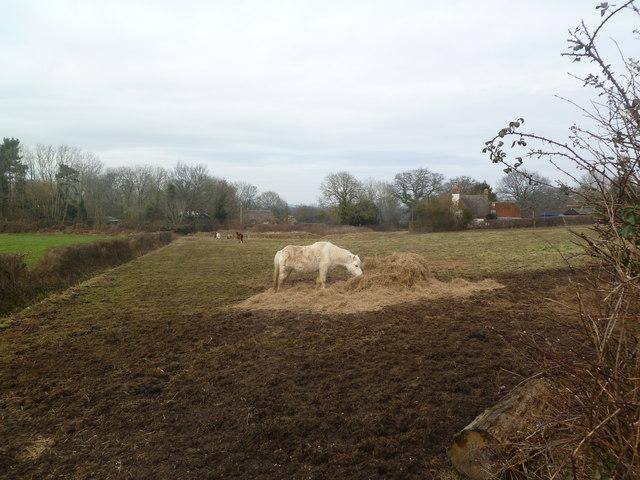 Colehill, horse grazing