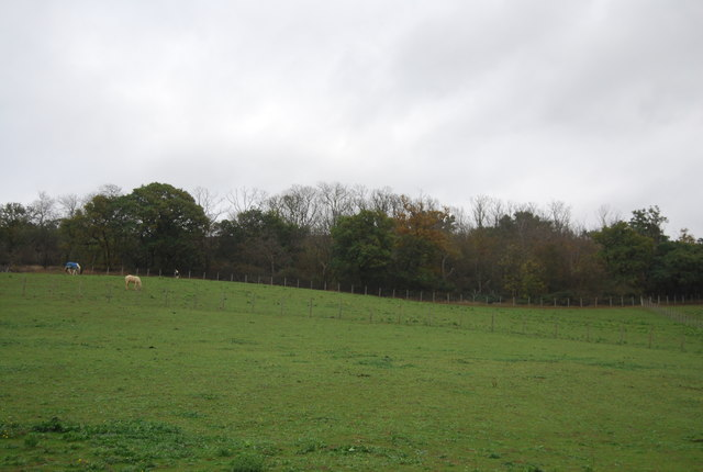 View to Northward Hill Reserve