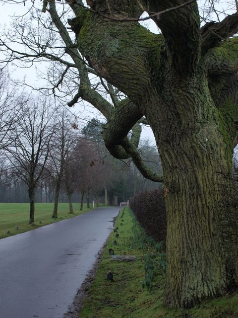 Tree and road in Pollok Park