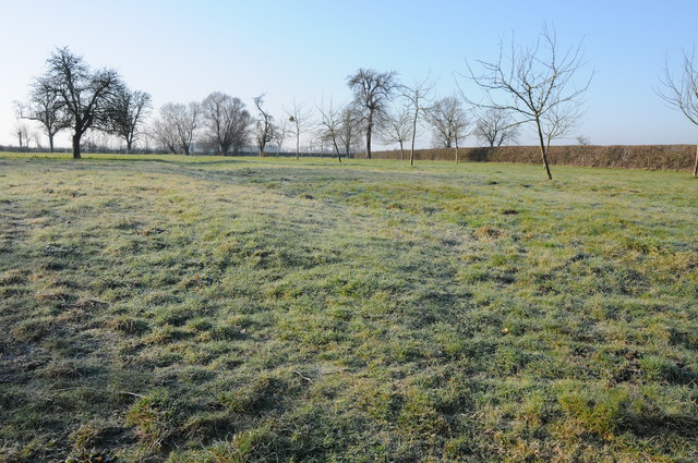 Orchard near New Moreton Farm