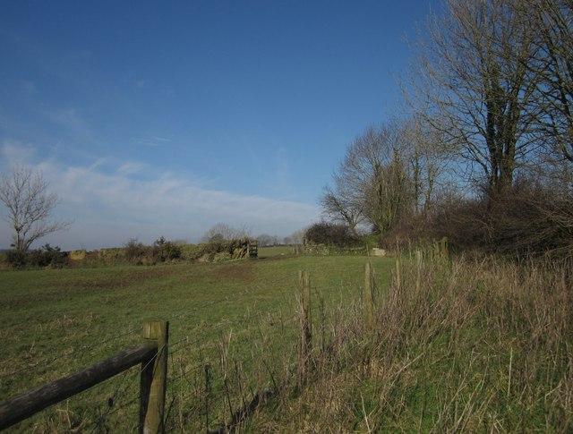 Field and gateway near Broadwoodwidger