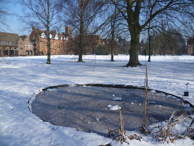 Icy pond at Homerton College