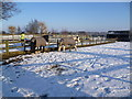 TL2668 : Horses in the snow at Wood Green Animal Shelter by Marathon