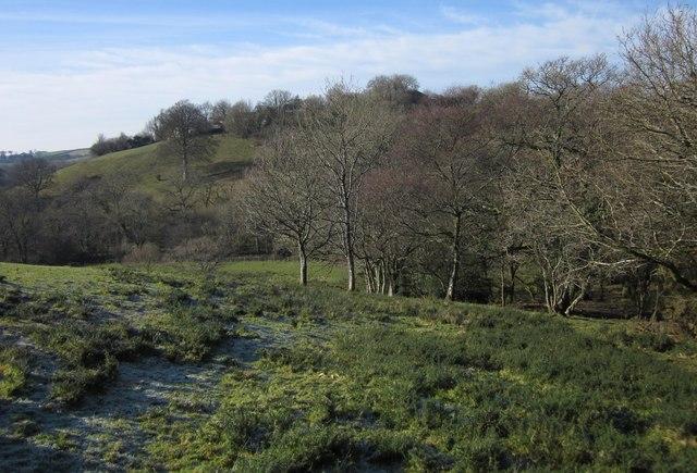 Edge of woodland below Rexton