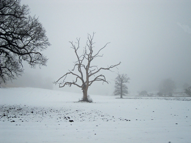 Lone tree in Ickworth Park