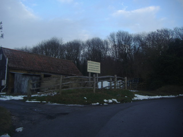Entrance to Whitehead's Nursery, Skeet Hill Lane