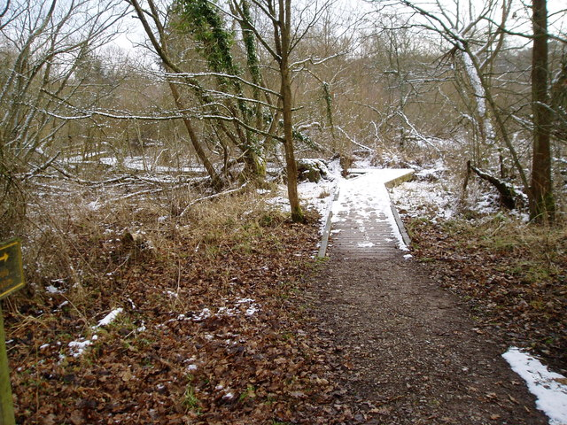 Winter scene at Warnham Nature Reserve
