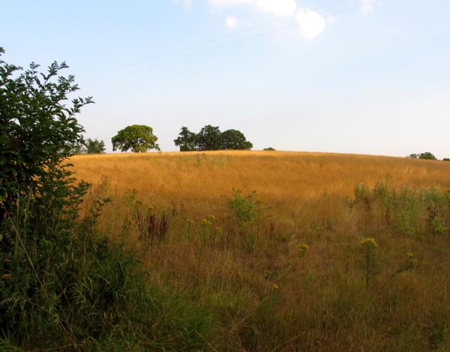 Field by Dane Bridge