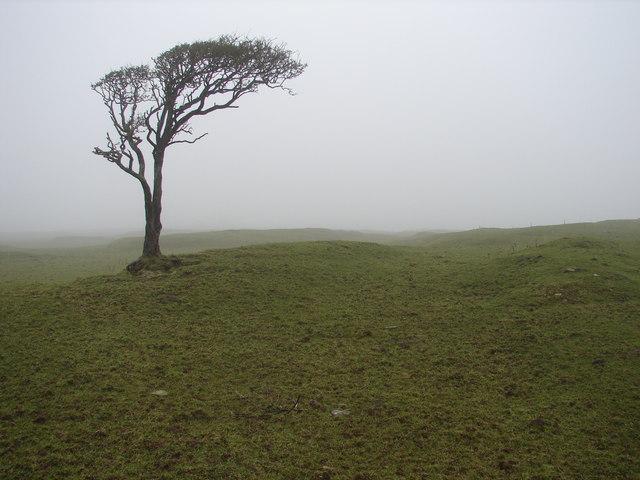 Tree in a mist