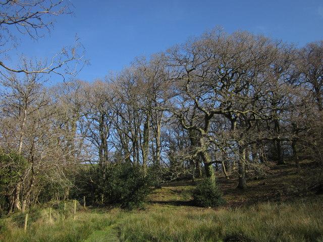 Woodland below Rexton