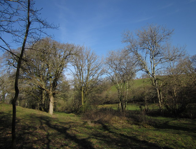Trees below Rexton