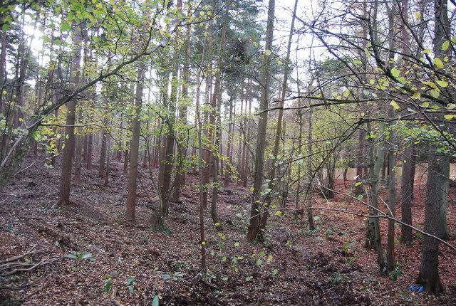 Woodland Tilgate Park