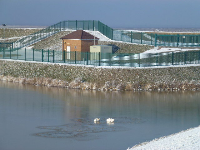 The Wash coast in winter - A pair of smart swans