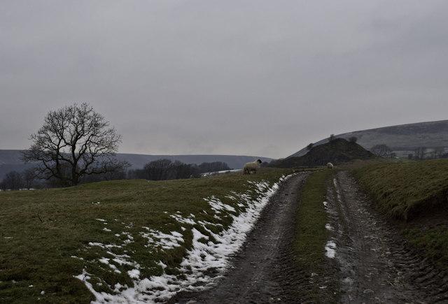 Track, Sheep and Sugarloaf