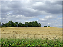 SJ7626 : Arable field near Shebdon, Staffordshire by Roger  Kidd