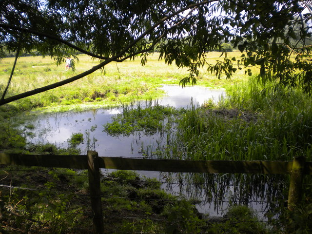 Stream in Sudbury Common Lands Nature Reserve