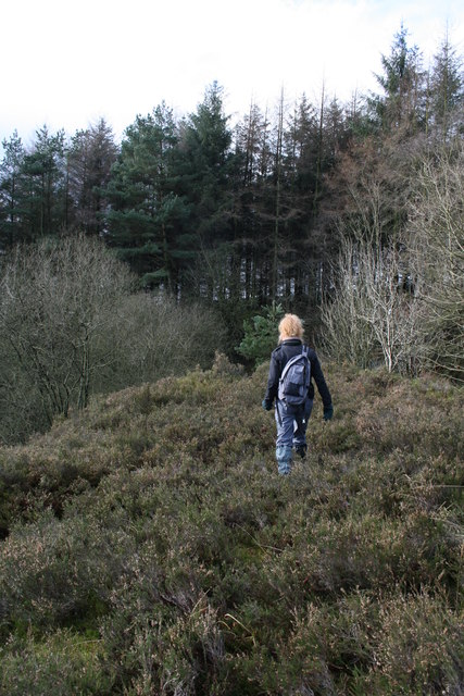 Looking for the old quarry, Longridge Fell