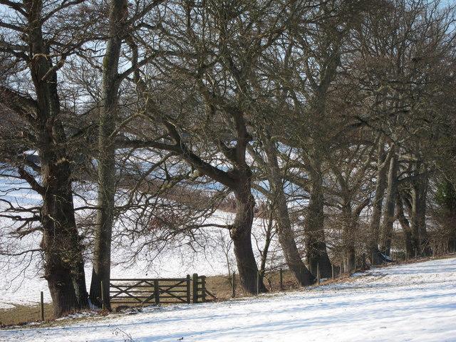 Trees off Brede Lane