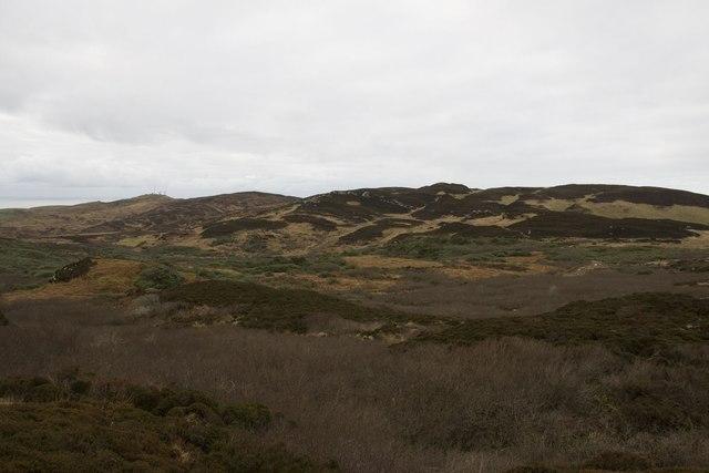 Woodland south of Cnoc Dubh, Islay