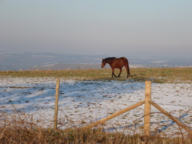 Okeford Fitzpaine: a horse on Okeford Hill