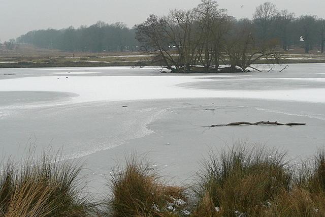 Frozen Pen Ponds