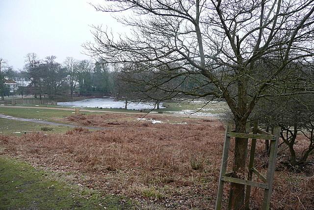 Ham Gate Pond