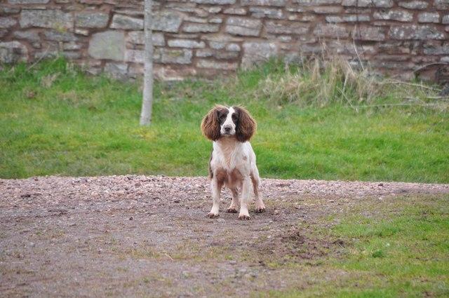 Mid Devon : Kytton Barton Farm - Little Dog