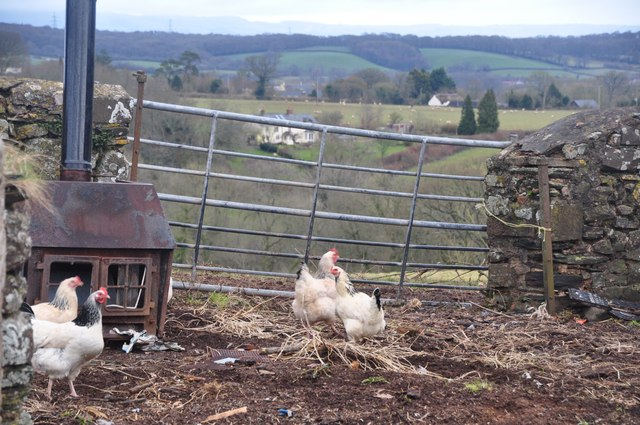 Mid Devon : Chickens & Steels Cottage