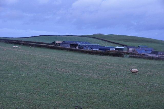 Mid Devon : Lea Barton & Sheep