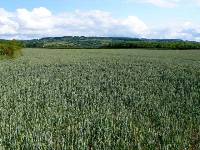 Fields near Buckland Fields