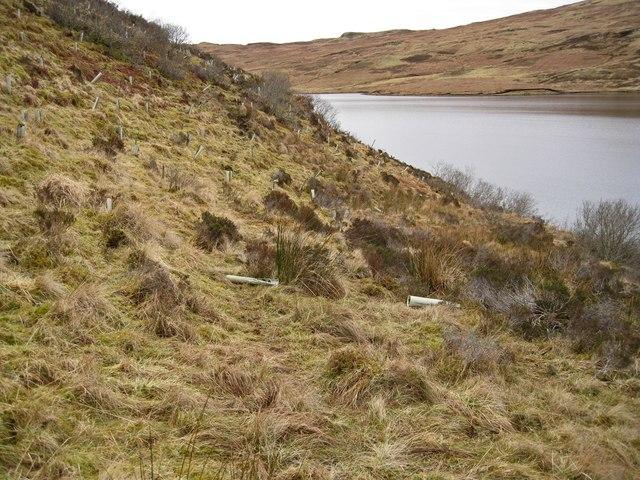 Planted hillside above Loch Duagrich