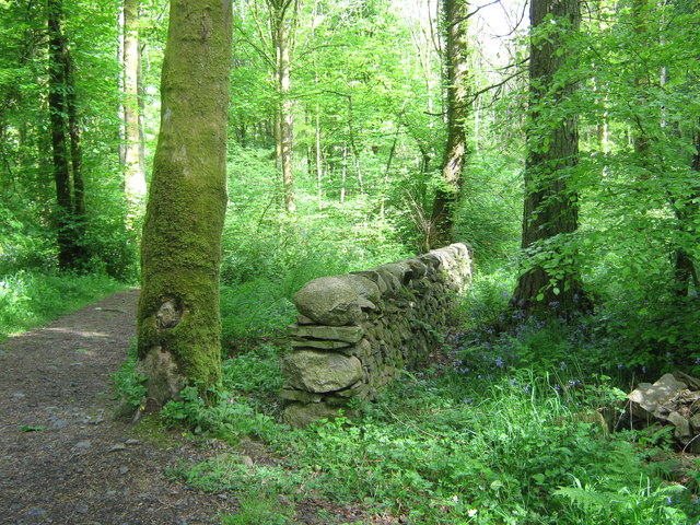 A drystane dyke at Moat park