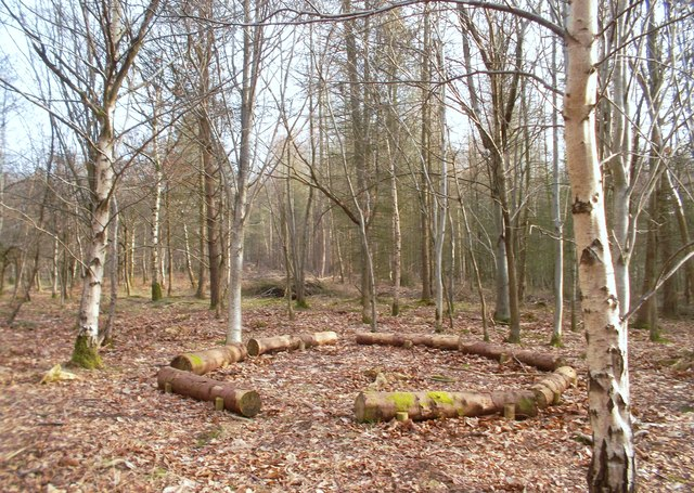 Log Circle in The Birches