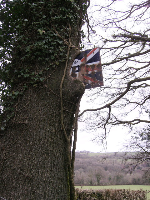 """Sign """"in"""" tree by old garage of Glandwr"""