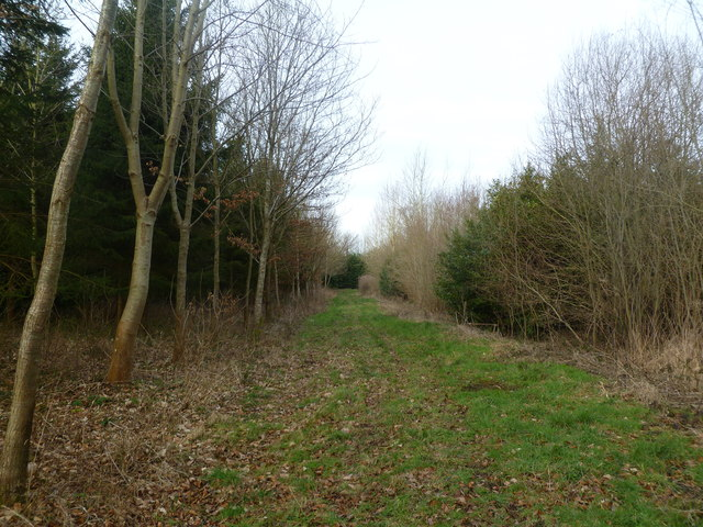 Moor Crichel, forestry track