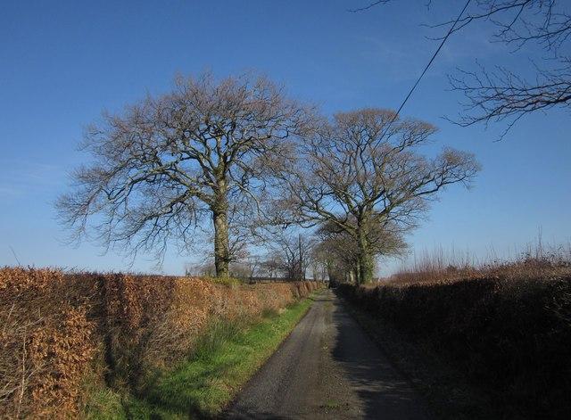 Oaks, Westweekmoor