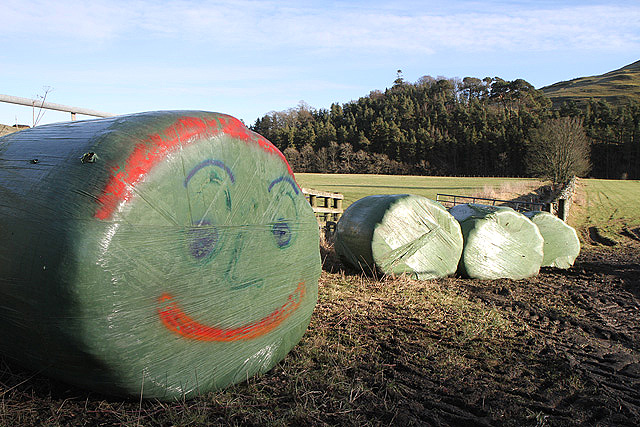 A contented wrapped bale