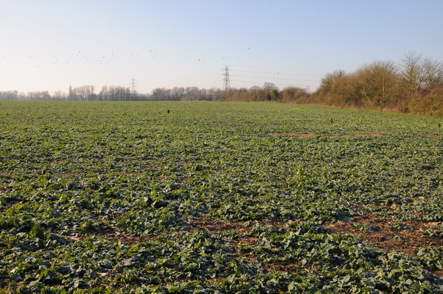 Arable field near Whitminster
