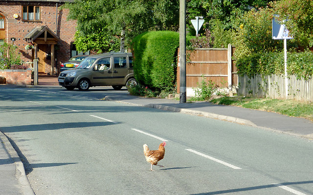 So why did the chicken cross the road?