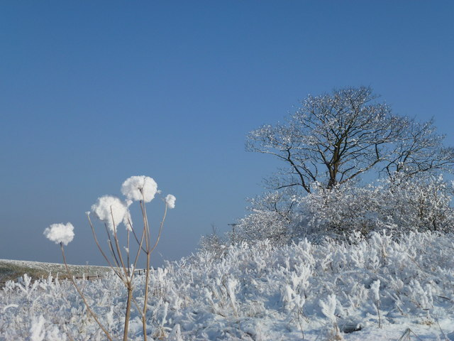 The Wash coast in winter - Hoar frost on an old sea bank