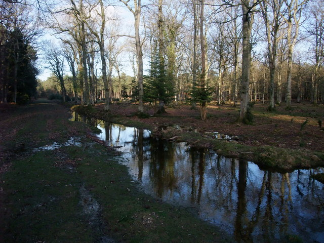 Dames Slough Inclosure, New Forest