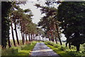 TL0029 : Access road to Herne Poplar, Toddington, Beds. by nick macneill