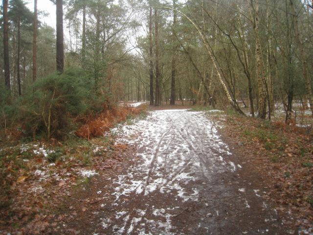 Path on Pyestock Hill