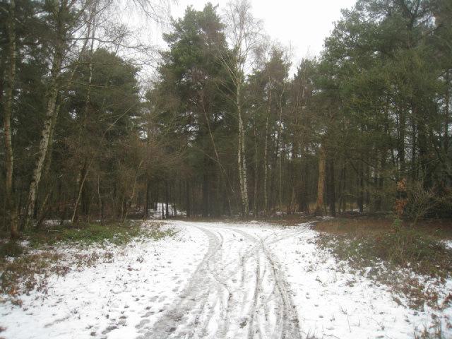 Coniferous woodland - Pyestock Hill