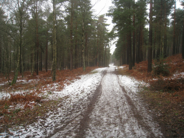Track / bridleway at Pyestock Hill