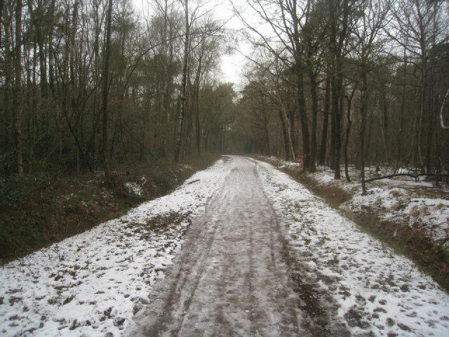 Bridleway to Fleet Pond