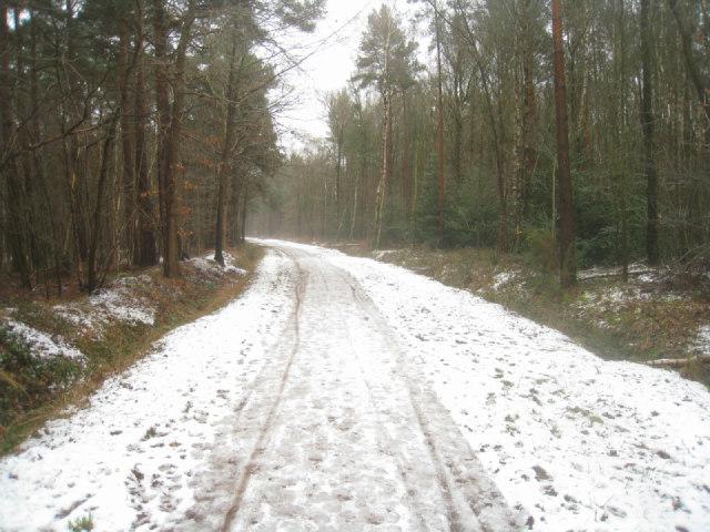 Bridleway through Pyestock woods