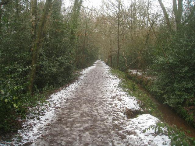 Path through Gelvert Glade