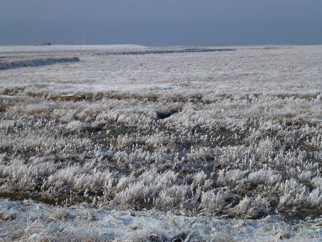 The Wash coast in winter - Hoar frost on the marsh