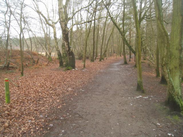 Path by Fleet Pond (northern edge)